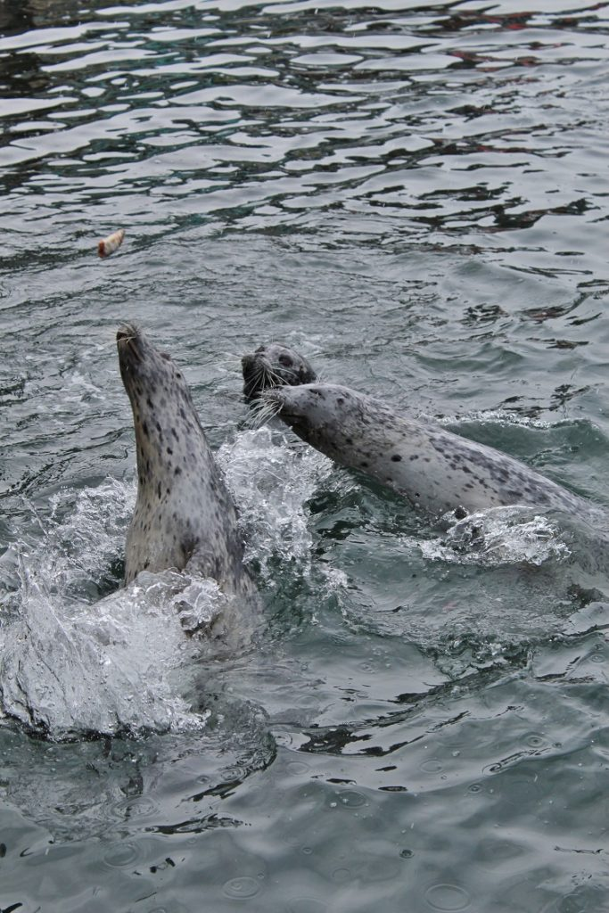 Visiting Victoria, British Columbia?  You MUST stop by Fisherman's Warf!  You may even get to see the wild seals!