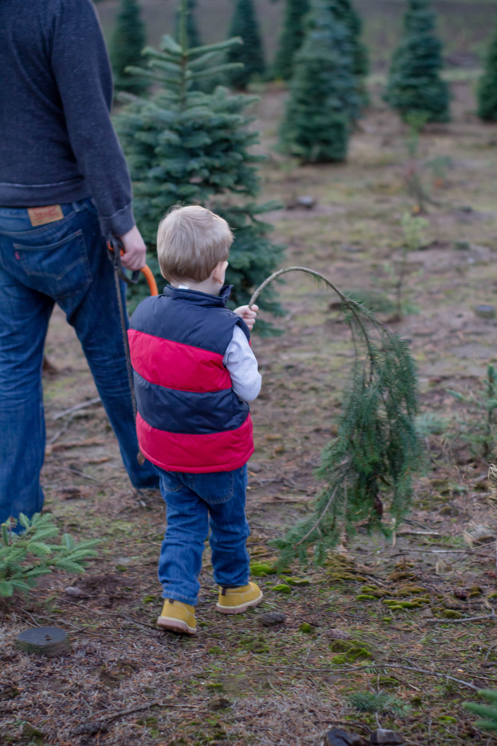 The great Christmas tree hunt - a tradition for the whole family