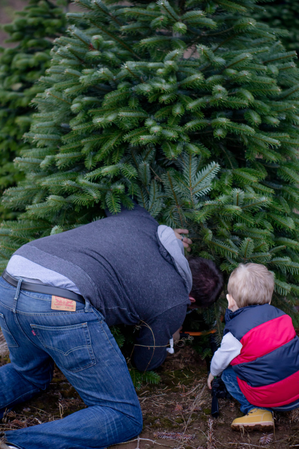 Finding your Christmas tree is a Christmas tradition for the whole family