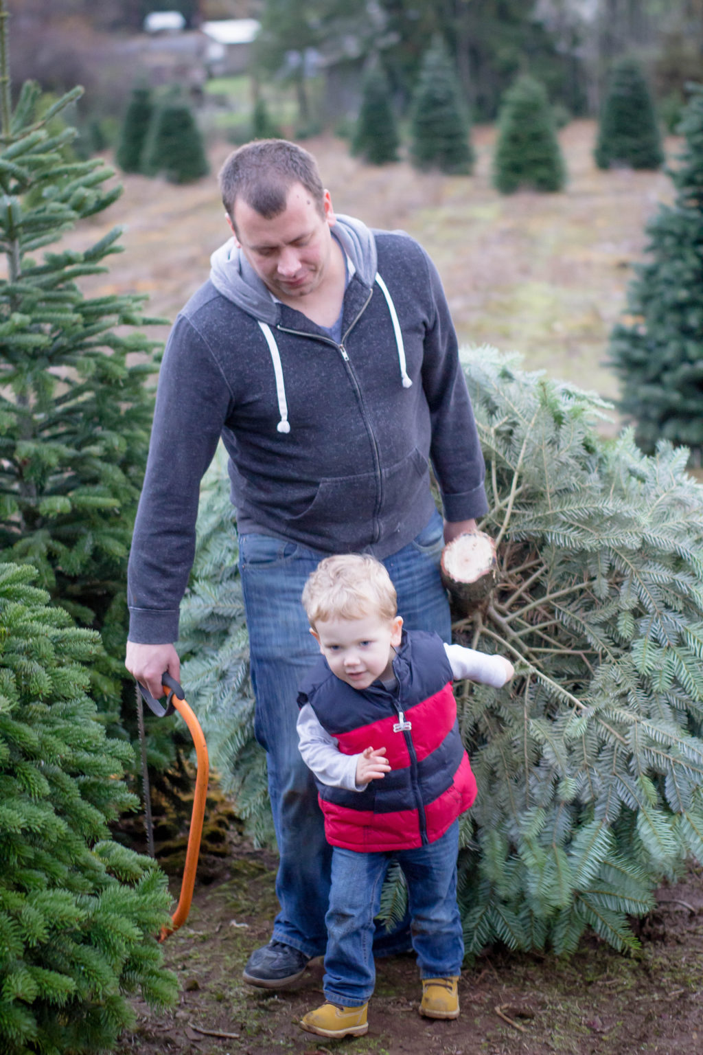 Finding a live Christmas tree is a wondeful Christmas tradition