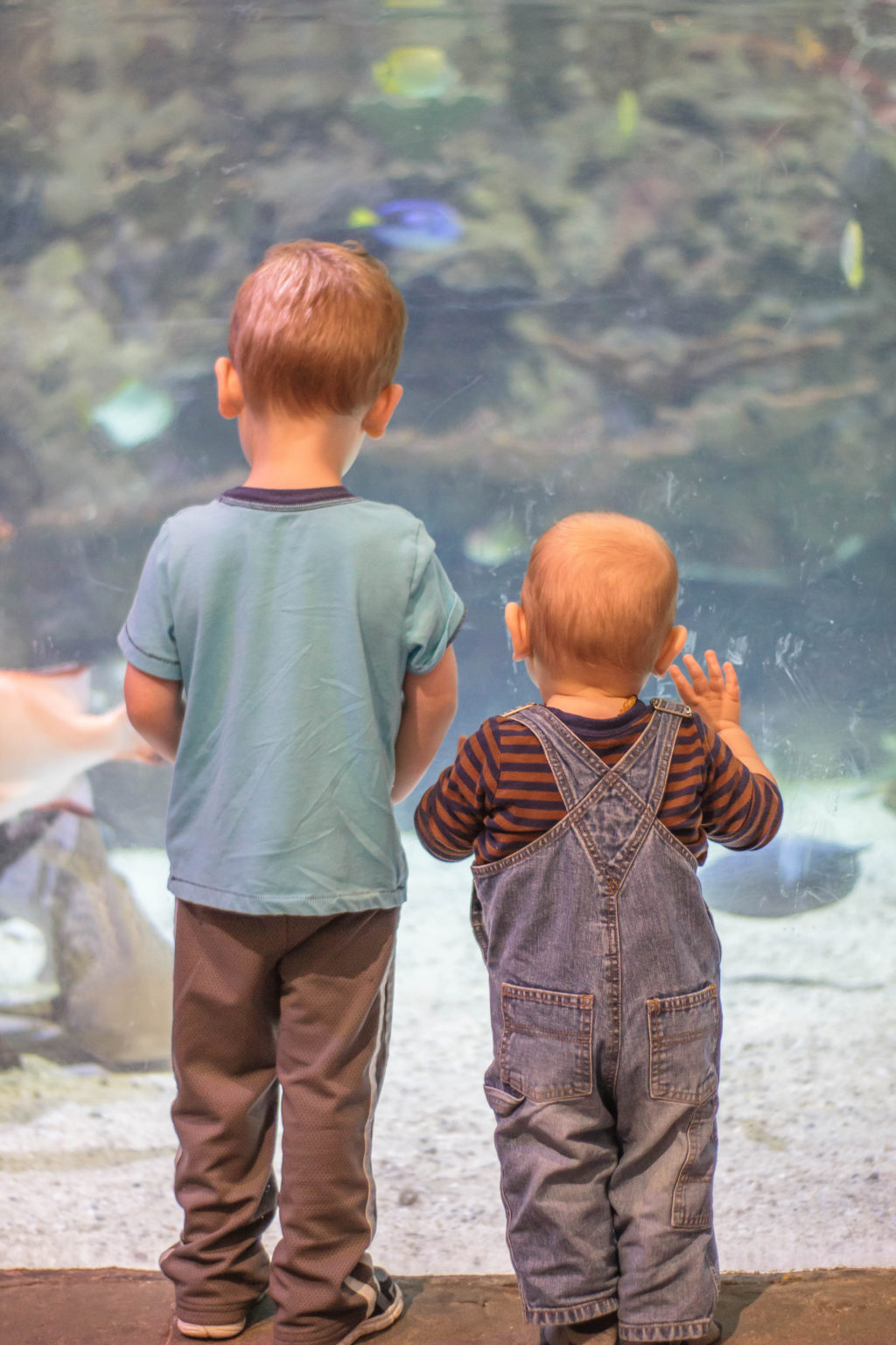 Tips for Visiting the Point Defiance Zoo and Aquarium