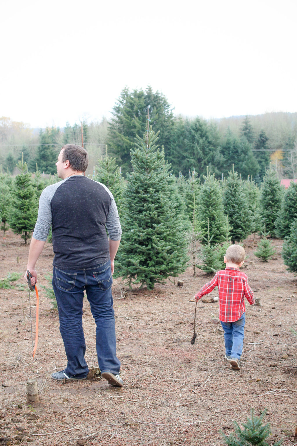 Looking for the perfect Christmas tree at the Christmas tree farm
