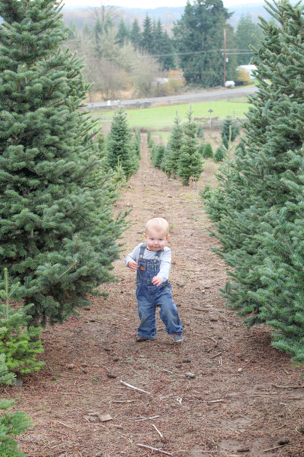 How to find the perfect Christmas tree