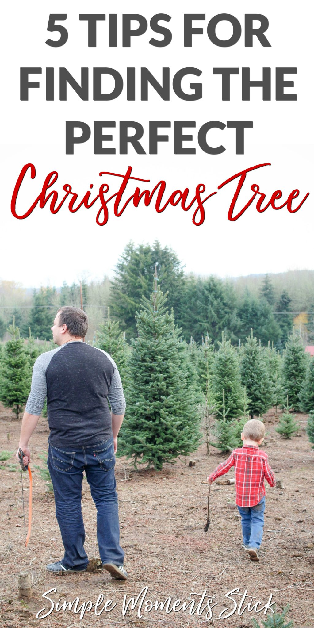 Out of all the types of Christmas trees, how do you find the best?